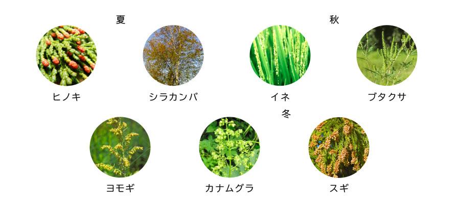 2020 カモガヤ 花粉